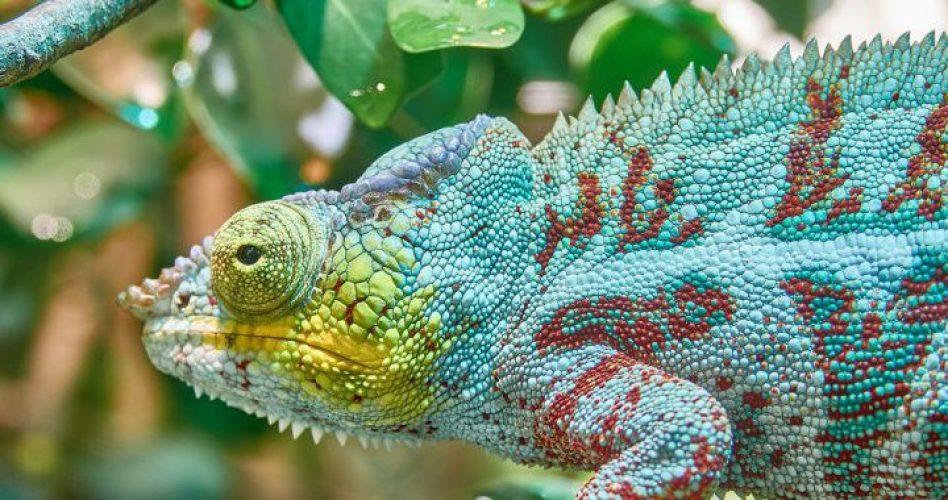 chameleon-2645504_1280-1-880x380-721x380